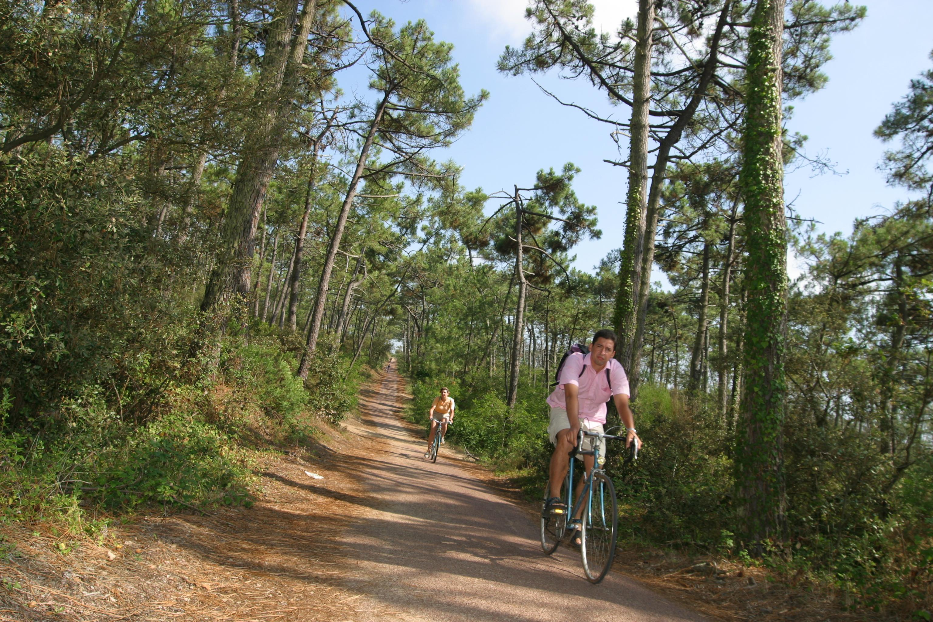 velo foret pins royan atlantique
